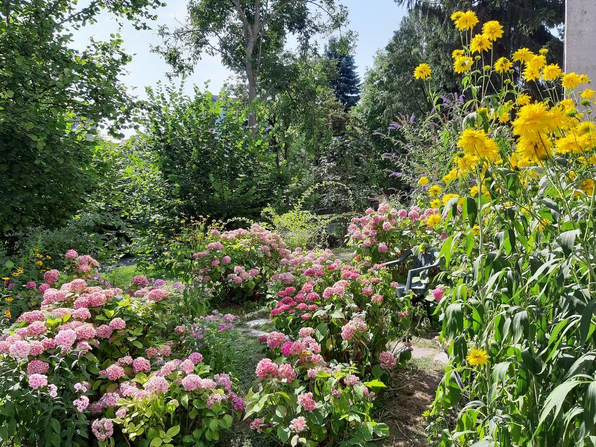 Ogródek mieszkańca